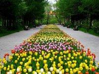 Дендропарк Зеленограда